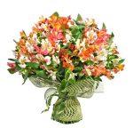 Астельмерии цветы – характеристика цветов, лучшие сорта, посадка, уход, полив, подкормка, подготовка к зиме, размножение, использование в дизайне сада, сочетание с другими цветами при посадке и составлении букетов