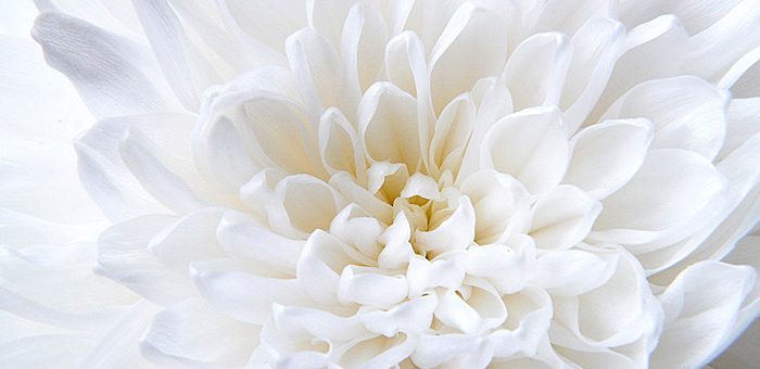 Белый цвет фото