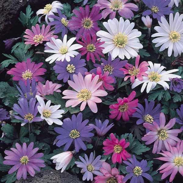 cvety-pohozhie-na-astry-nazvanie_1.jpg