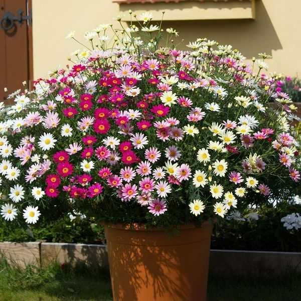 cvety-pohozhie-na-astry-nazvanie_2.jpg