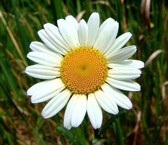 cvety-pohozhie-na-astry-nazvanie_23.jpg