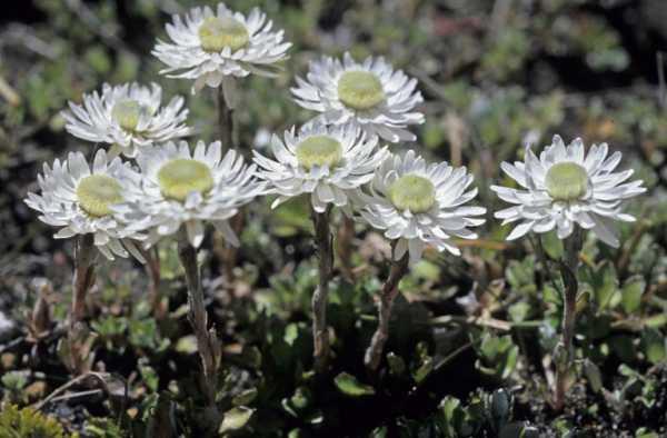 cvety-pohozhie-na-astry-nazvanie_3.jpg