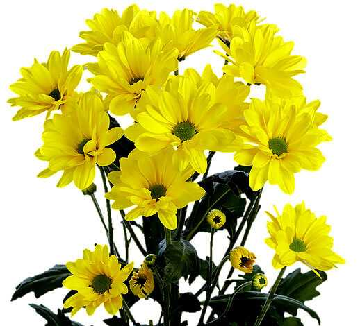cvety-pohozhie-na-astry-nazvanie_34.jpg