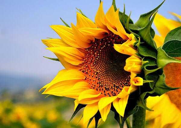cvety-pohozhie-na-astry-nazvanie_35.jpg