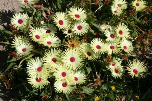 cvety-pohozhie-na-astry-nazvanie_4.jpg