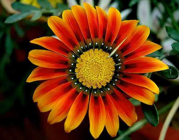 cvety-pohozhie-na-astry-nazvanie_41.jpg