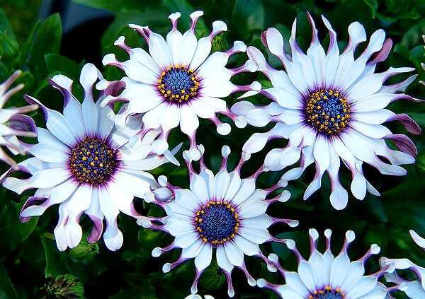 cvety-pohozhie-na-astry-nazvanie_42.jpg