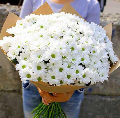 cvety-pohozhie-na-astry-nazvanie_44.jpg