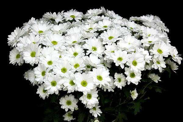cvety-pohozhie-na-astry-nazvanie_46.jpg