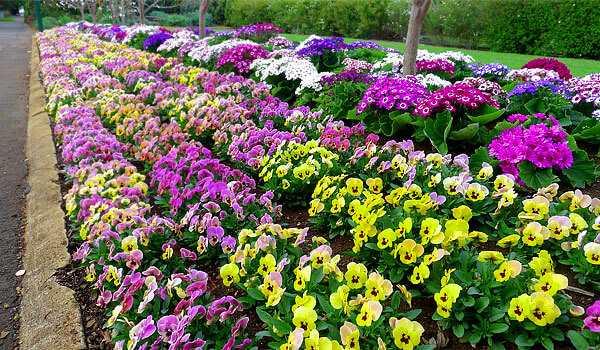 cvety-pohozhie-na-astry-nazvanie_53.jpg