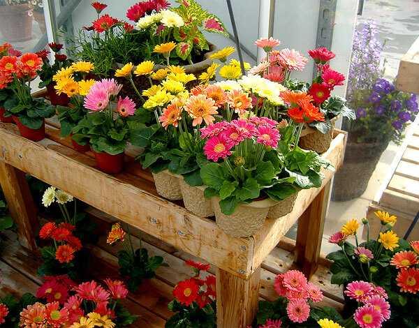 cvety-pohozhie-na-astry-nazvanie_56.jpg