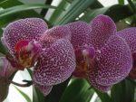 Цветы шафран – Шафраны и бархатцы — это разные цветы? Как выглядят растения на фото, а также чем отличаются, и какие черты от них объединила в себе имеретинская разновидность?