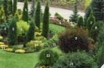 Декоративные деревья хвойные – декоративные растения,ландшафтный дизайн,хвойные,деревья,кустарники,саженцы,плодовые,декоративные растения,декоративные растения