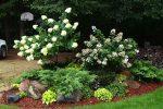 Декоративные кустарники для сада красивые – Красивые декоративные кустарники для сада и дачи — фото с названиями, низкие и высокие кусты, фото, видео |