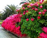 Декоративные кустарники фото и названия с красивыми листьями – Лучшие декоративные кустарники для сада, обзор сортов, рекомендации, 60 фото — каталог статей на сайте