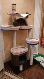 Домики для кошек из дерева – Каждой кошке жизненно необходимо движение. Закажите домик или комплекс для кошек, защитите свою мебель и увеличте продолжительность жизни своего любимца на несколько лет.