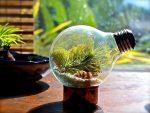 Флорариум геометрический своими руками – пошаговая инструкция с фото для начинающих, подходящие растения и емкости для посадки