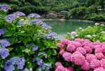 Фото гортензия в саду
