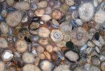 Фото из природных камней – Натуральные камни – фото с названиями. Камни природные, фото и названия распространенных пород