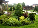 Фото хвойники в саду