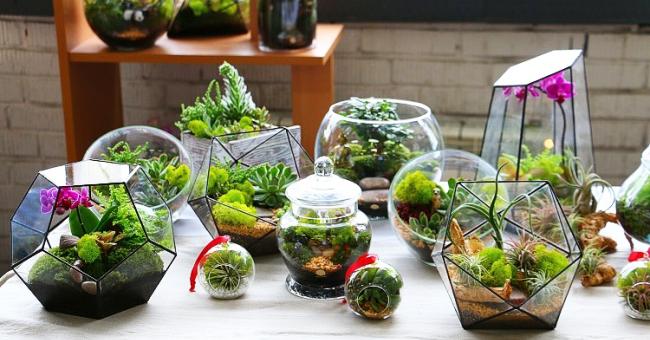 Как сделать самому флорариум – создание из суккулентов, с орхидеями, геометрический, закрытый флорариум, видео