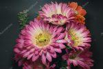 Картинки самые красивые хризантемы – фото и картинки розовая хризантема, скачать изображения на Depositphotos®
