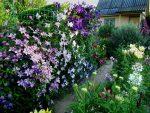 Клематис белый кустовой – особенности растения, агротехника, посадка, обрезка, сочетание с другими растениями, применение в ландшафтном дизайне
