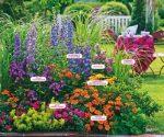 Клумбы из гортензии схемы – Описание цветочных схем. Подборка клумб и цветников для малых и больших садов. Фото клумб и цветников.