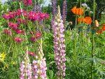 Красивые многолетники долгоцветущие – Садовые цветы — цветущие все лето (42 фото): выращивание своими руками долгоцветущих, многолетних растений, фото и видео