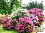 Кустарники красивые – Самые популярные цветущие кустарники для сада и правила их выращивания