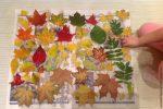 Лак для поделок из листьев – Делаем заготовки осенних природных материалов для творчества – Ярмарка Мастеров