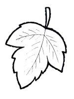 Листики фото – Раскраска листья деревьев. Распечатать картинки деревьев с листьями и без листочков.