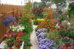 Многолетники неприхотливые фото с названиями – Неприхотливые многолетники, цветущие все лето – красочное многообразие цветов на участке