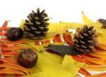 Поделки из листьев желудей – Поделки из природного материала: шишек, веточек, листьев, желудей, на праздник Осени в школу и детский сад