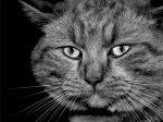 Про серый цвет – Серый цвет, все самое интересное. Откровение, факты и фото. » Поржать.ру