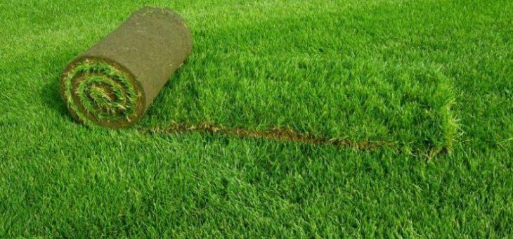 Рулонный газон какой лучше – что это такое, какие бывают виды, как правильно выбрать, уложить своими руками и ухаживать, фото