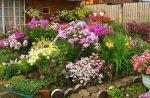 Самые долгоцветущие красивые и неприхотливые цветы для дачи – неприхотливые для ленивых, красивые, простые без хлопот, легкие в уходе для клумбы