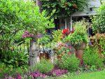 Самые неприхотливые многолетние растения для сада – Самые неприхотливые садовые растения Поговорим о неприхотливых садовых растениях Дом, сад-огород