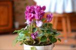 Семена глоксинии как выглядят – описание и фото того, как выглядит комнатное растение, названия сортов, какие на цветок цены, а также какой нужен уход этой красавице в домашних условиях