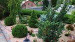Сосны в ландшафтном дизайне – Ландшафтный дизайн с композициями хвойных растений: названия, фото готовых решений