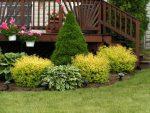 Спирея японская в дизайне сада фото – кустарник в дизайне сада Использование спиреи в ландшафтном дизайне. Садовые растения