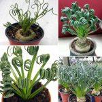 Суккуленты комнатные виды – фото и названия, каталог, виды, сорта, листовые, цветущие разновидности, домашние (комнатные растения), садовые