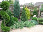 Теневыносливые хвойные растения для сада – Хвойные растения для сада (36 фото): особенности карликовых, тенелюбивых, декоративных хвойников, дизайн, сорта, фото и видео