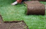 Технология газон рулонный – особенности, преимущества, критерии выбора, укладка своими руками, этапы и технология работы, подготовка участка, правила ухода