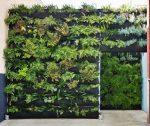 Вертикальное озеленение участка – Дизайн вертикального озеленения: дома, в квартире, своими руками. Растения для вертикального озеленения.. Вертикальное озеленение своими руками