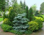 Виды хвойные растения – названия, фото, декоративные хвойники, ель, лиственное дерево, сосна, теплолюбивые на участке