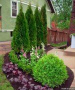Виды хвойных растений для сада фото и названия – названия, фото, декоративные хвойники, ель, лиственное дерево, сосна, теплолюбивые на участке