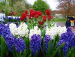Высокие многолетние цветы для дачи фото с названиями – Многолетние цветы — посадка и уход. Фото обзор красивого оформления на дачном участке