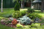 Хвойные на даче – названия, фото, декоративные хвойники, ель, лиственное дерево, сосна, теплолюбивые на участке