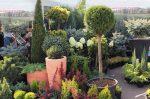 Хвойных деревьев цветы – названия, фото, декоративные хвойники, ель, лиственное дерево, сосна, теплолюбивые на участке